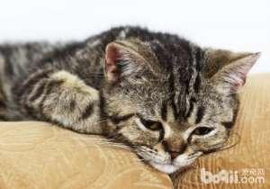 引起猫咪佝偻症的原因有哪些-猫咪常见病